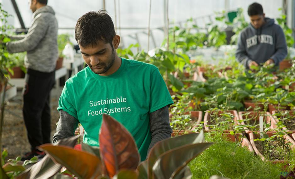A student working in the Sustainable Greenhouse.