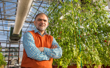 Dr Sajjad Rao stands inside the college's sustainable greenhouse
